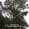 Rolling Thunder and Rain - Single album lyrics, reviews, download