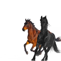 Old Town Road (feat. Billy Ray Cyrus) [Remix] by Lil Nas X song lyrics, mp3 download
