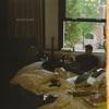 hopeless - Single album lyrics, reviews, download