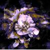 Anthea EP by Thrived album lyrics