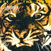 Eye of the Tiger by Survivor song lyrics