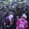 High Tide in the Snake's Nest album lyrics, reviews, download