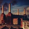 Animals by Pink Floyd album lyrics
