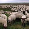 Grey Sheep album lyrics, reviews, download