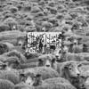 Grey Sheep II album lyrics, reviews, download