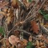 Upper Echelon (feat. T.I. & 2 Chainz) - Single album lyrics, reviews, download